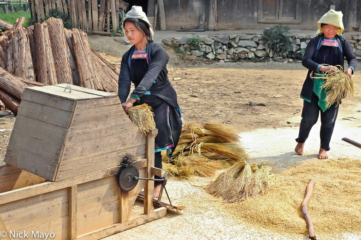 China,Dong,Guizhou,Paddy,Thresher,Threshing, photo
