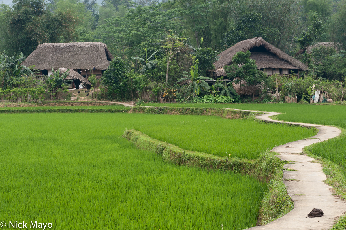 Ha Giang,Paddy,Residence,Thatch,Vietnam, photo