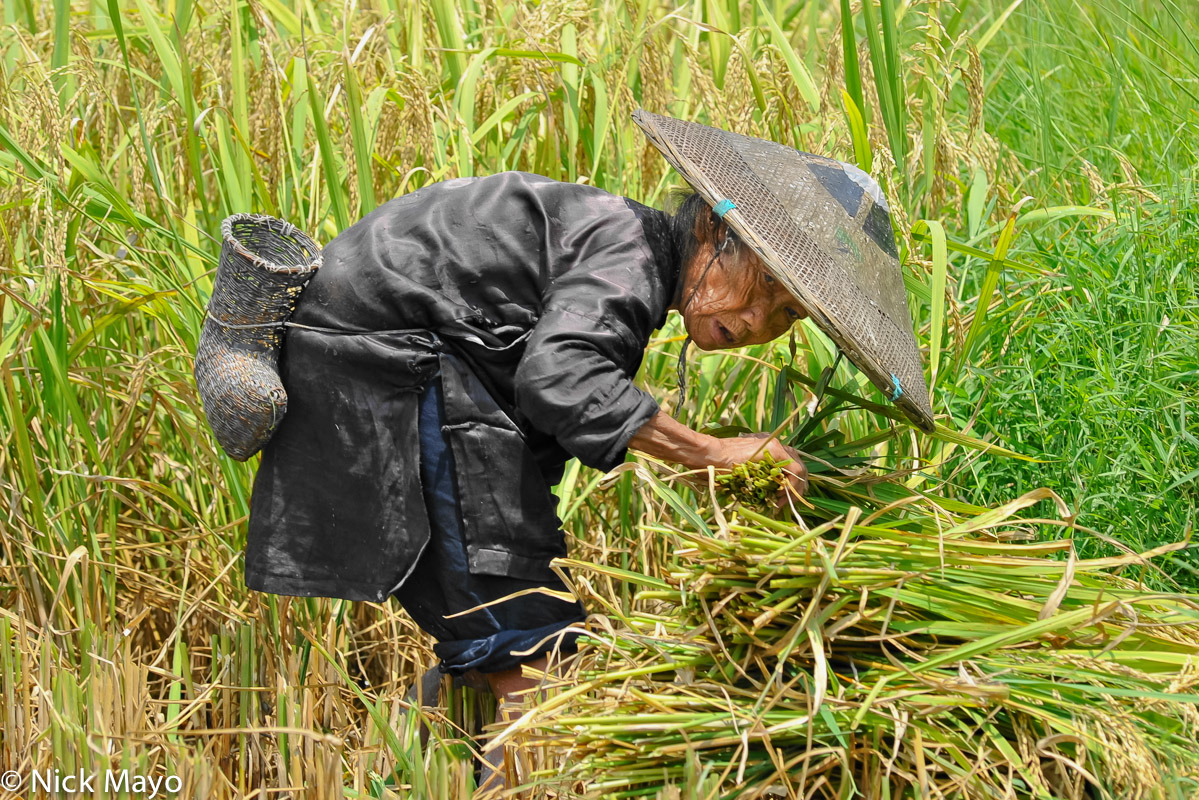 China,Guizhou,Harvesting,Hat,Paddy,Sickle Case,Zhuang, photo