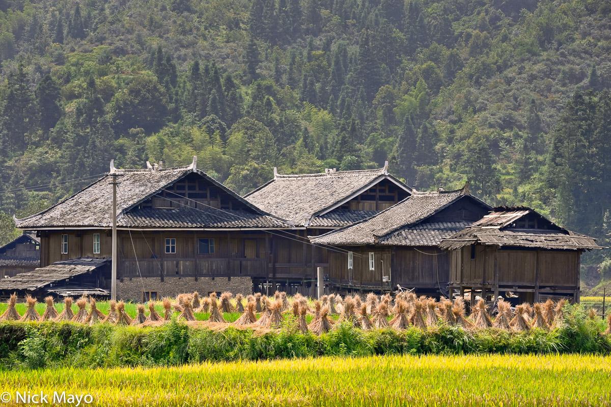 China,Guizhou,Paddy,Residence, photo