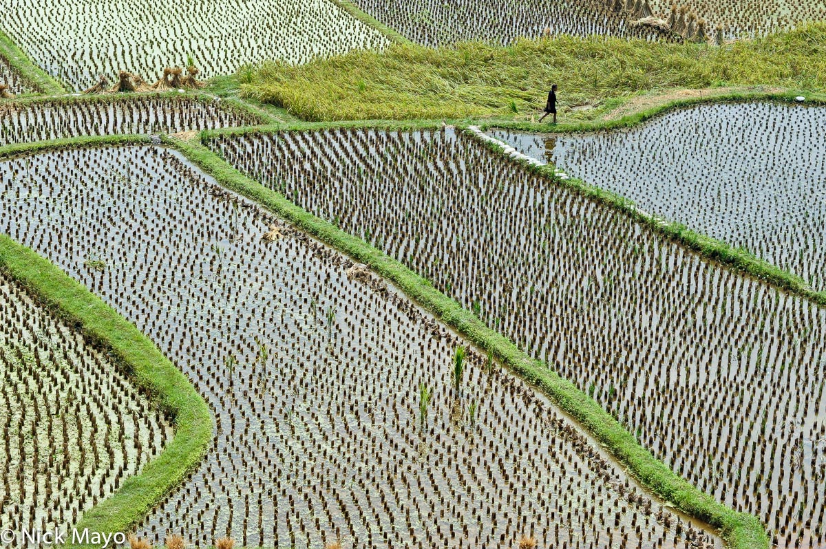 China,Guizhou,Paddy, photo
