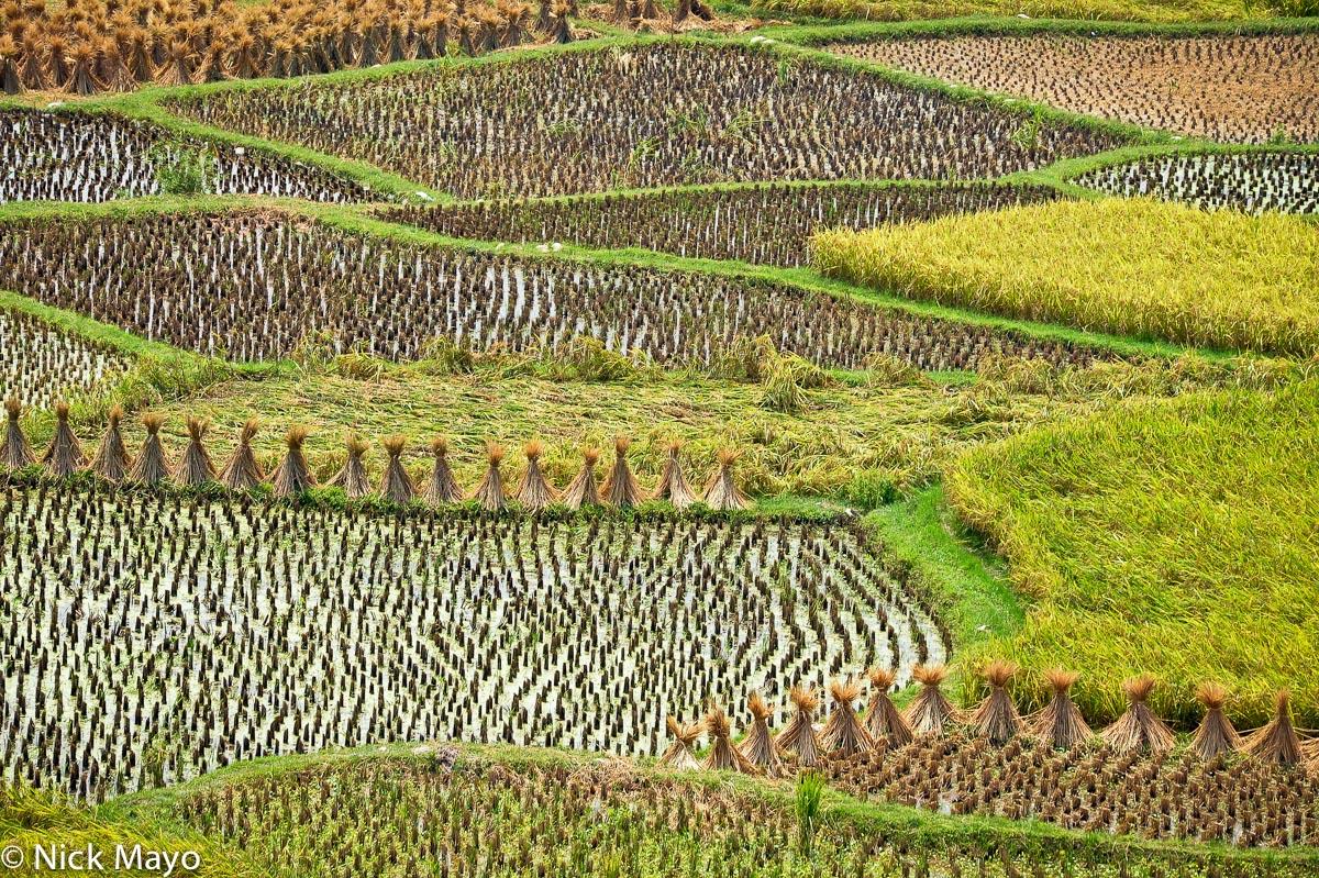 China,Guizhou,Paddy, photo