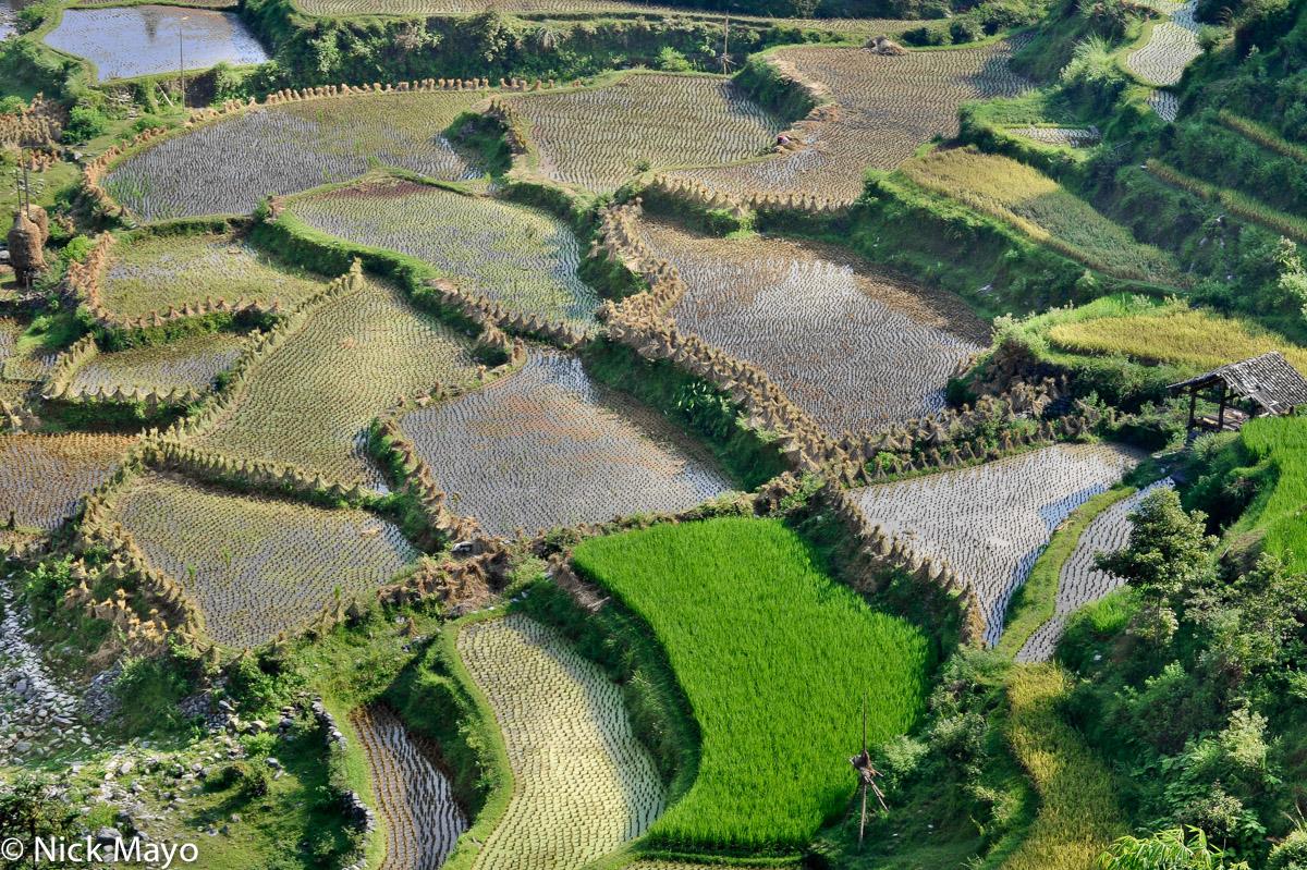 Paddy fields near Gan Bien village.
