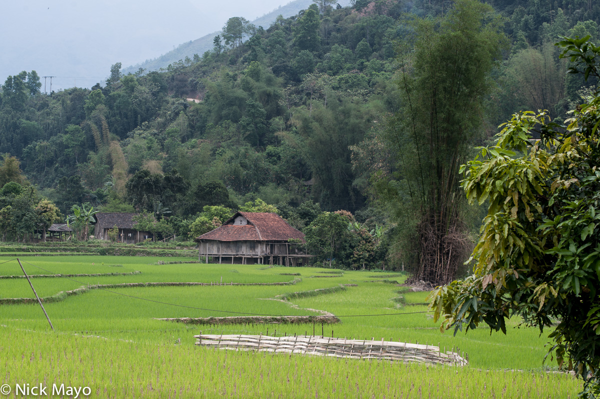 A Thai house at the edge of the paddy fields at Mae Due.