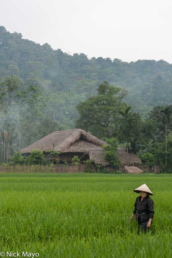 Dai,Ha Giang,Paddy,Residence,Thatch,Vietnam, photo