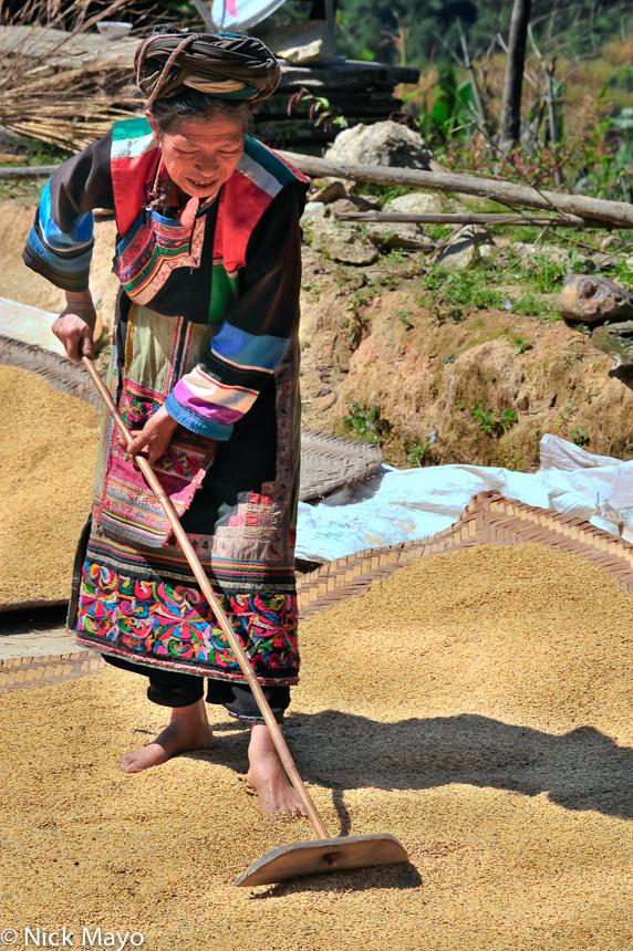 China,Lisu,Paddy,Raking,Yunnan, photo