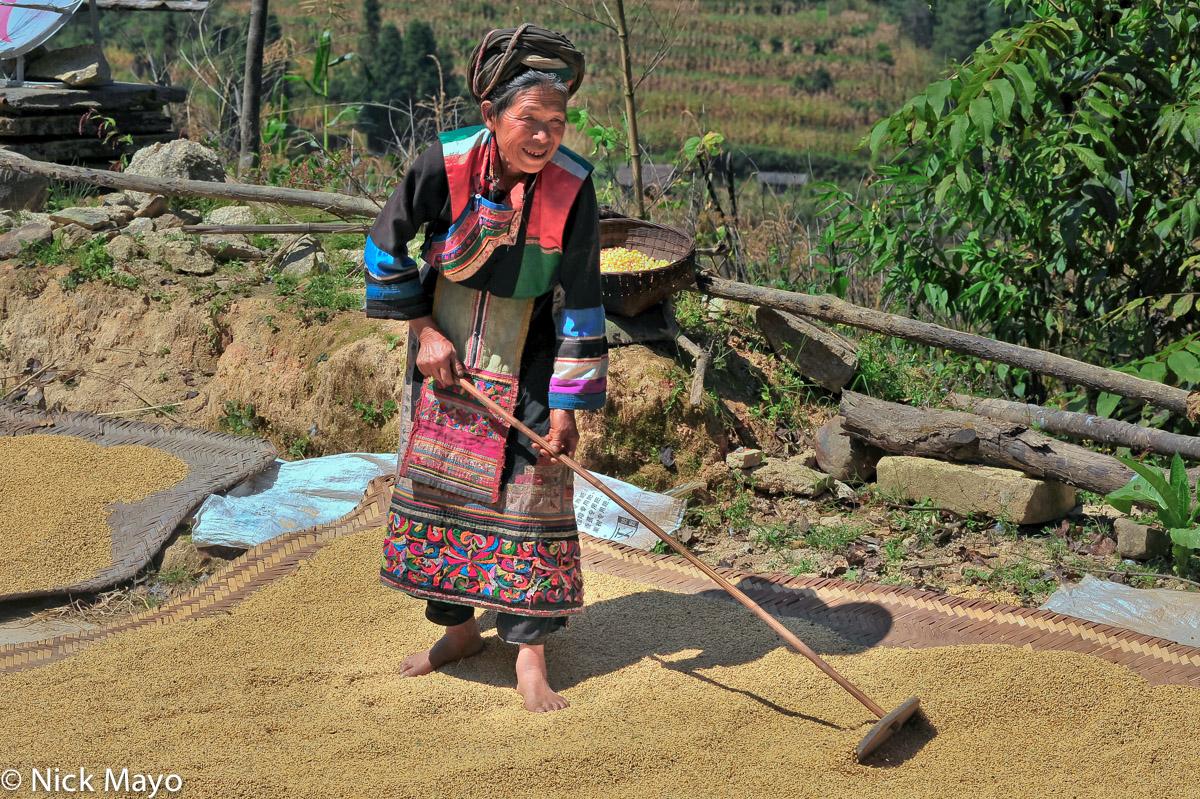 Apron,China,Lisu,Paddy,Raking,Turban,Yunnan, photo