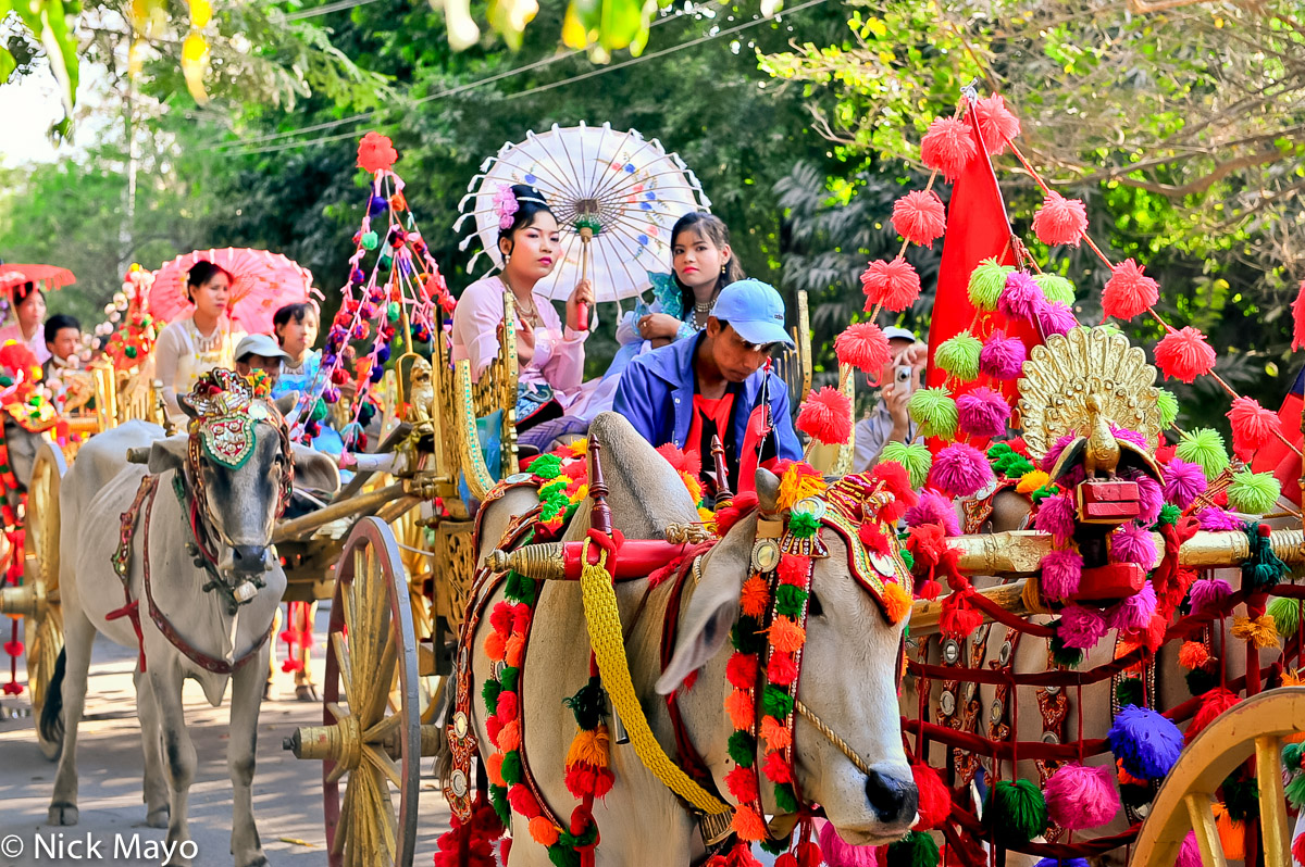 Bullock,Burma,Cart,Sagaing Division,Wedding, photo