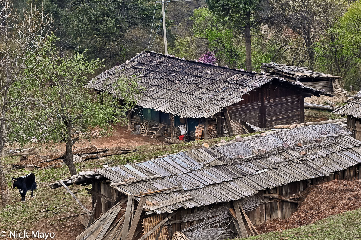 China,Cow,Residence,Roof,Yunnan, photo