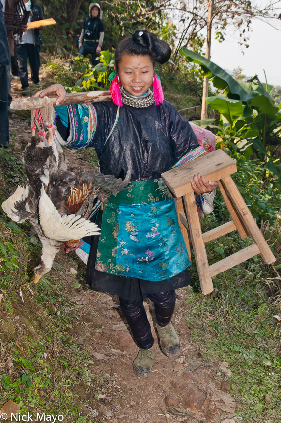 Chicken,China,Duck,Guizhou,Miao,Shoulder Pole,Wedding, photo
