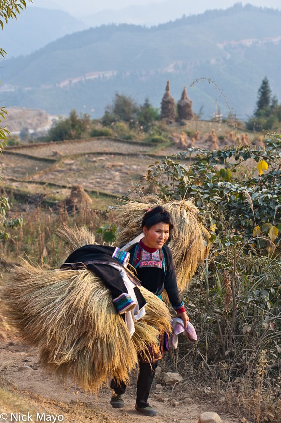 China,Guizhou,Hair,Miao,Paddy,Shoulder Pole, photo