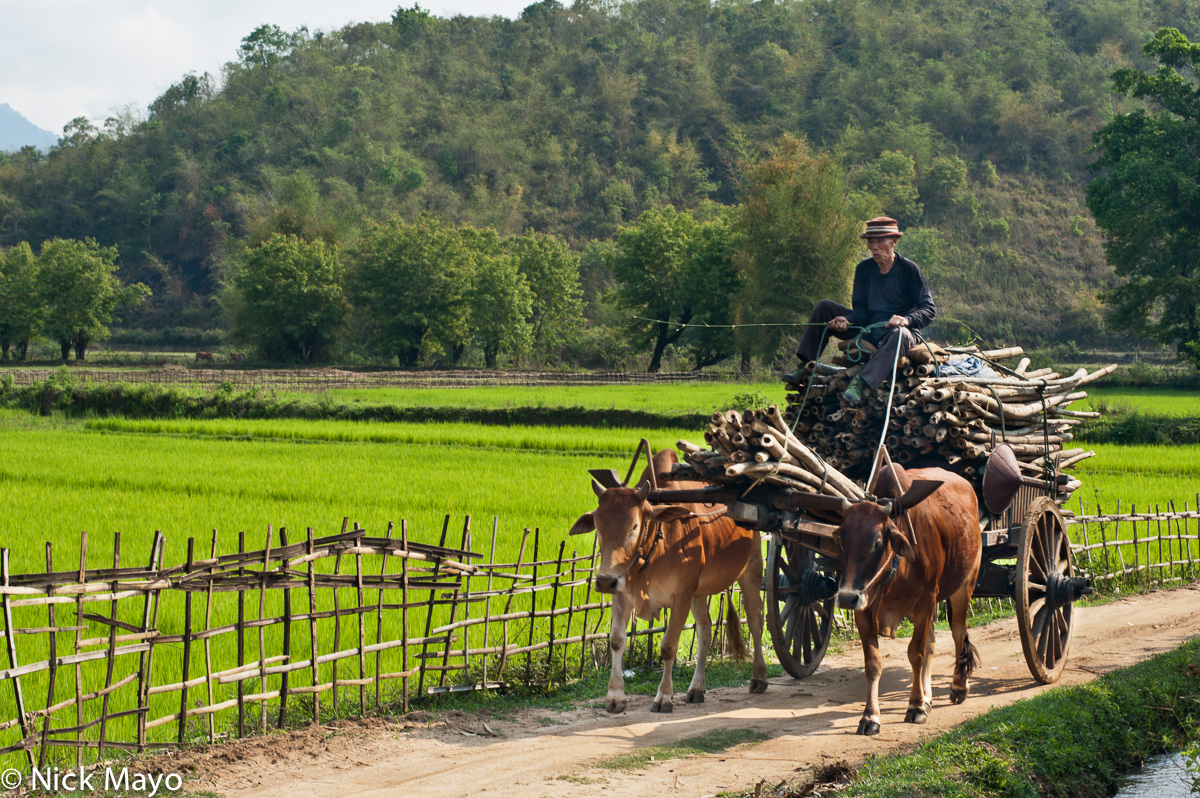 Bullock,Burma,Cart,Shan State, photo