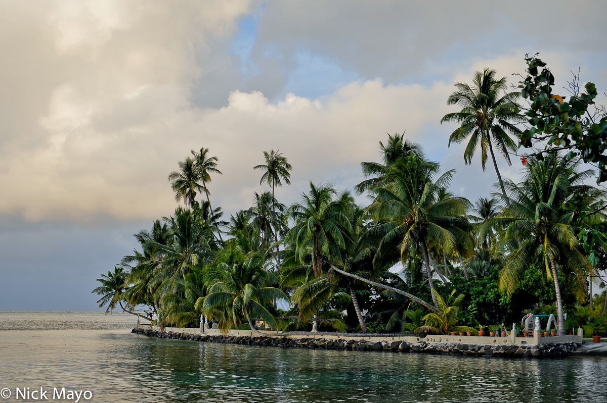 Coconut Palm,French Polynesia,Iles Sous Le Vent, photo
