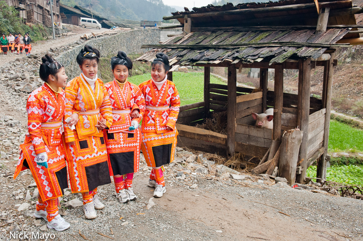 Four Miao girls walking past a pig pen on their way to a wedding in the village of Kazhai.