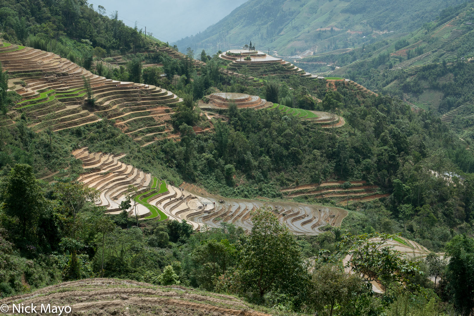Lao Cai, Paddy, Vietnam, photo