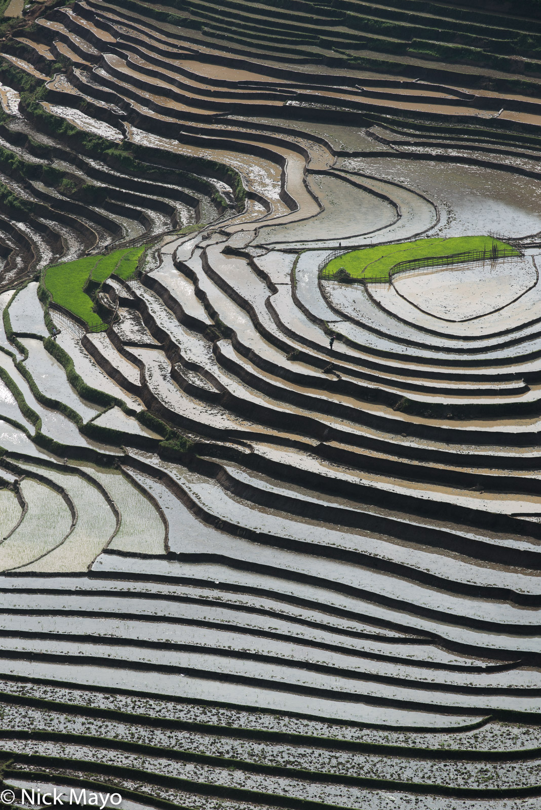 Seed beds on terraced paddy fields near Muong Hum.