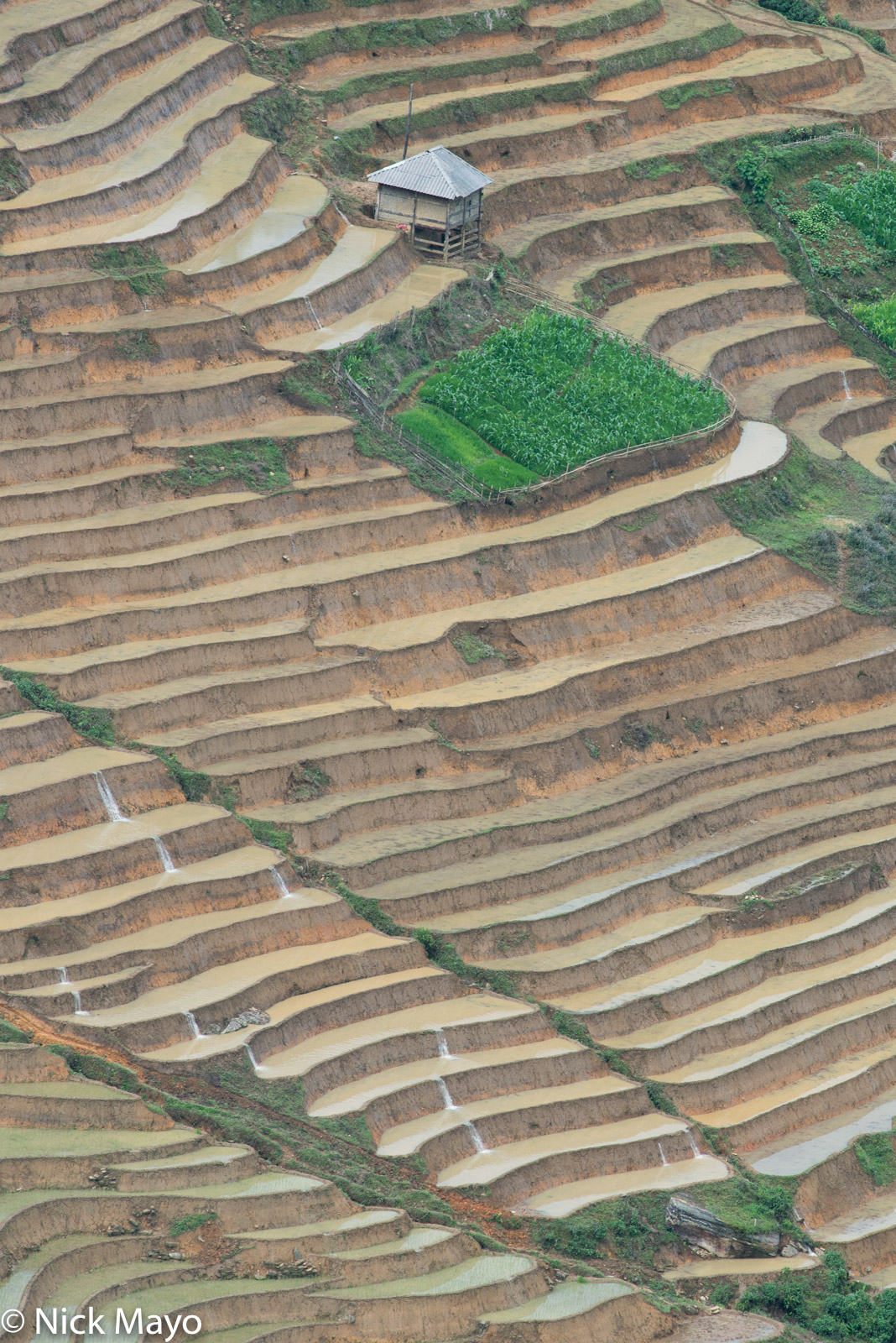 Terraces flooded for planting near Y Ty.