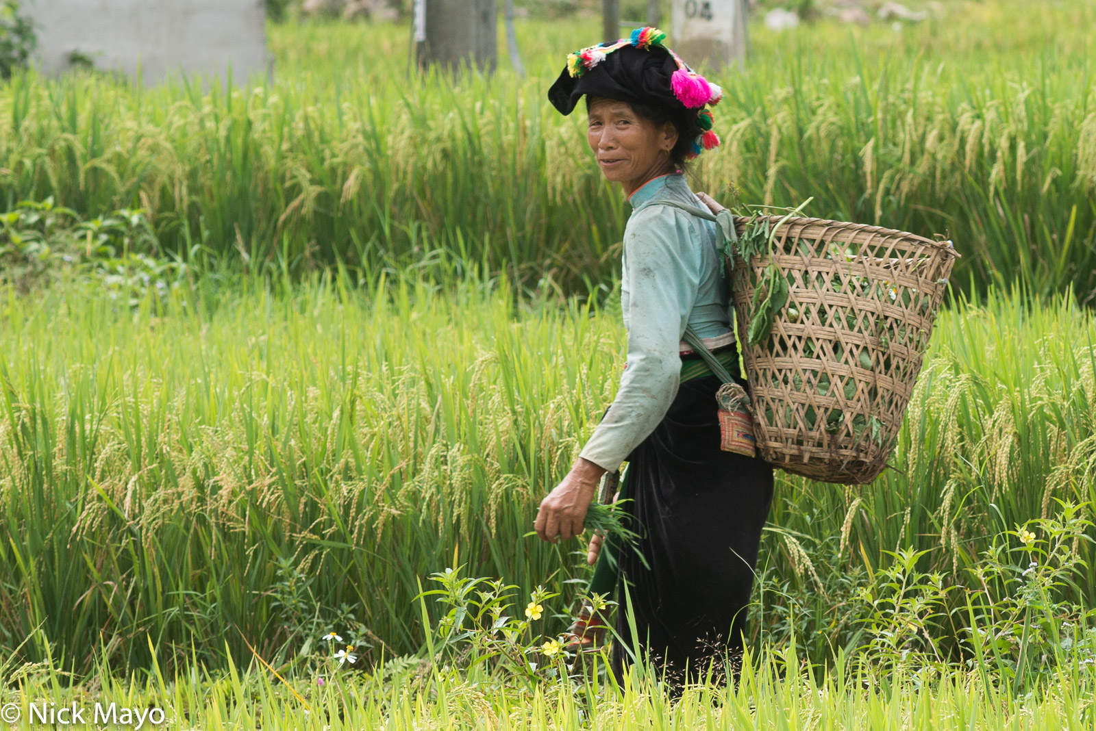 Backstrap Basket, Dai, Lai Chau, Paddy, Vietnam, photo