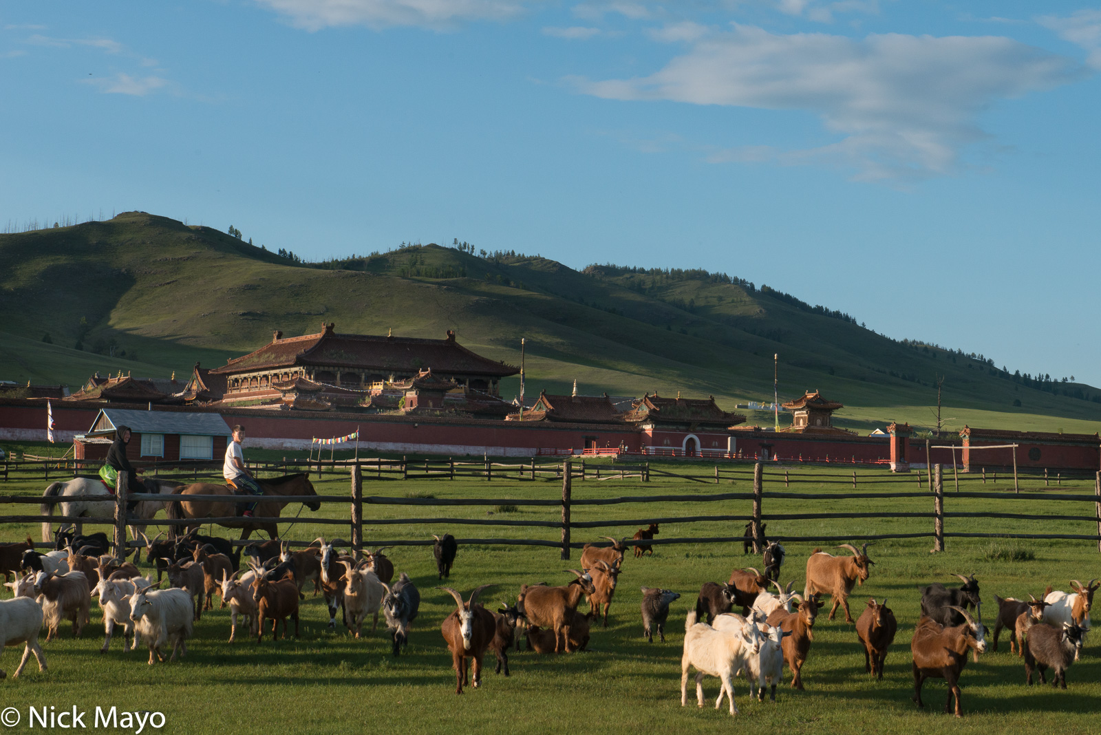Goat, Herding, Horse, Monastery, Mongolia, Selenge, photo