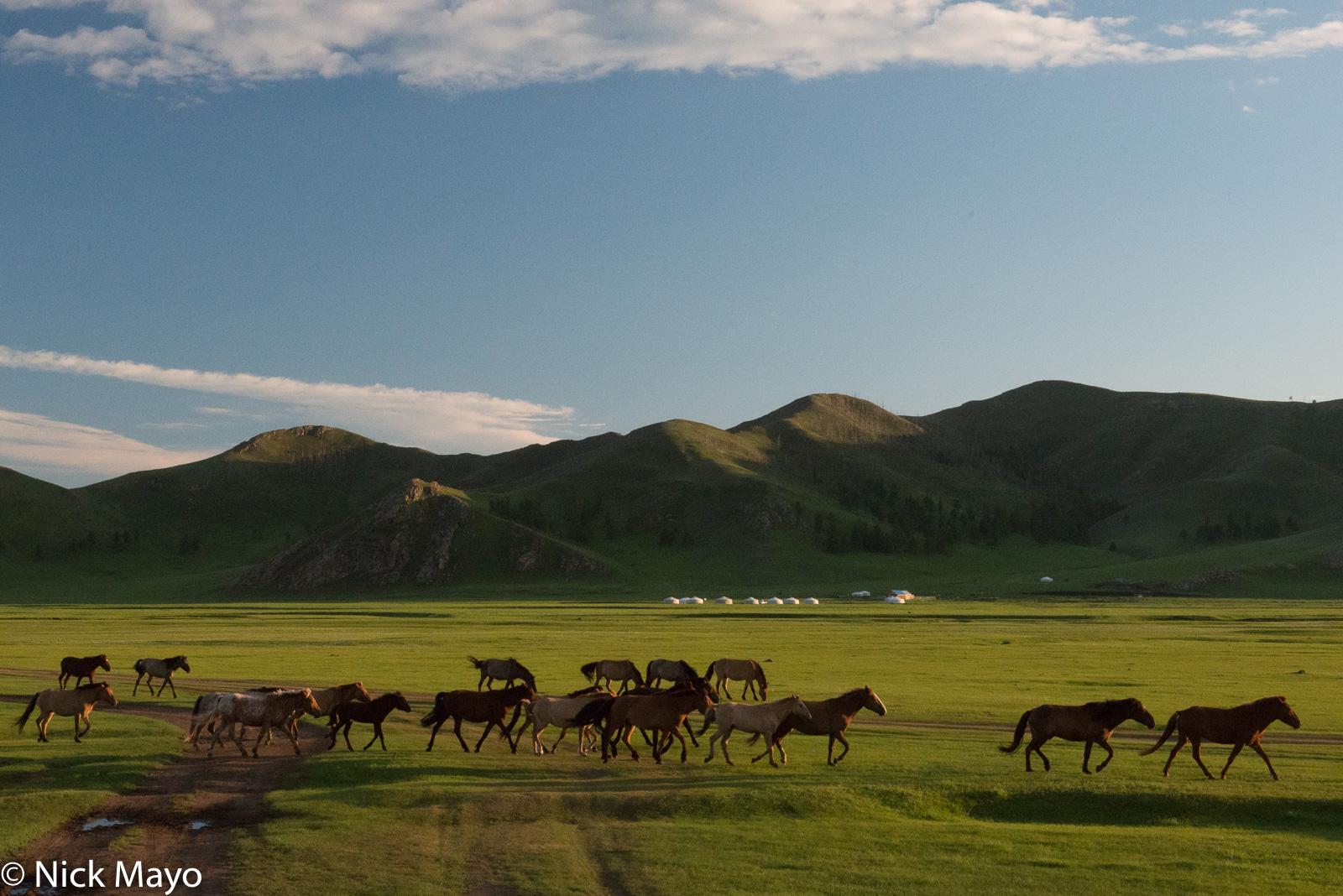 Horse, Mongolia, Selenge, photo