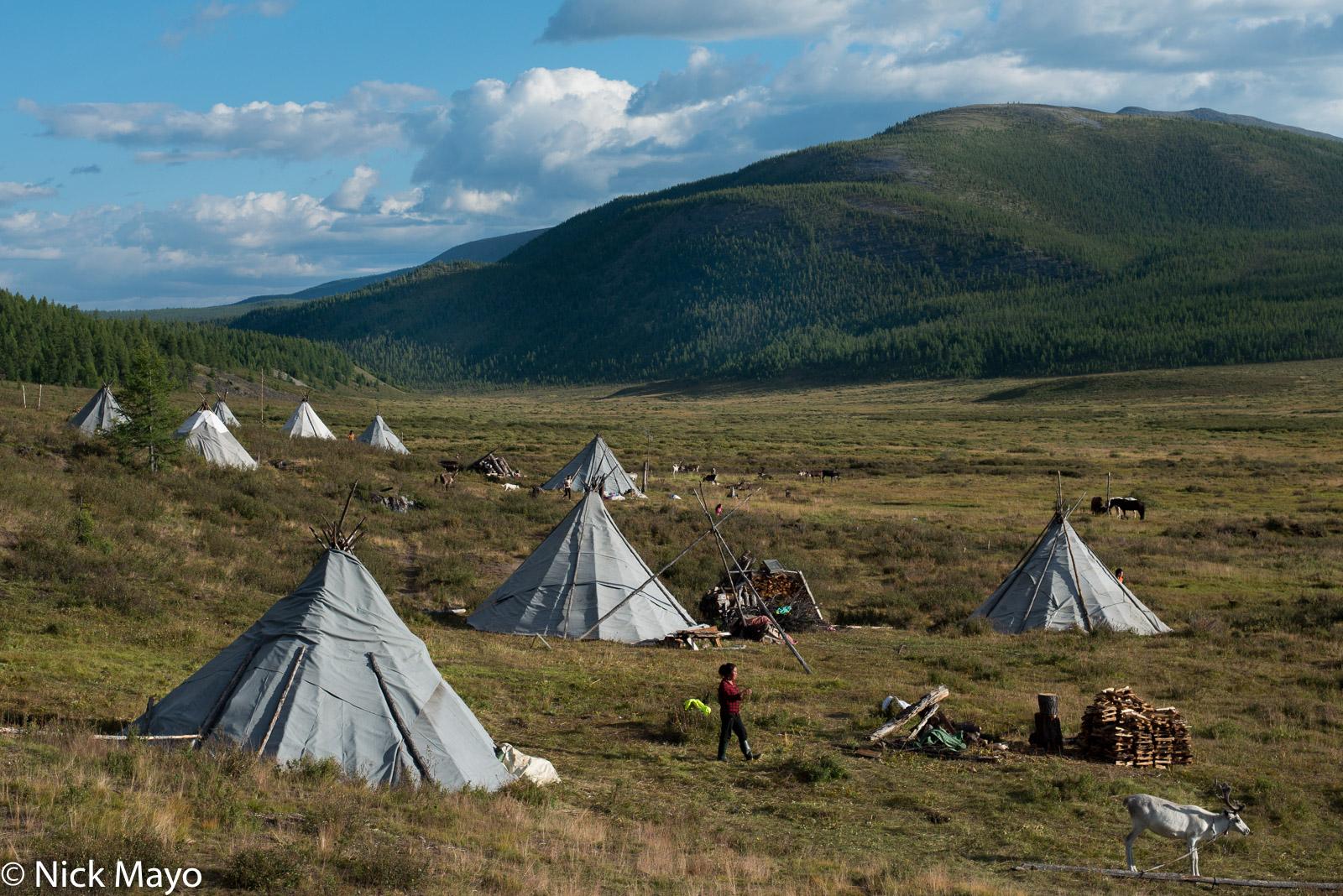 Dukha, Khovsgol, Mongolia, Reindeer, Tent, photo