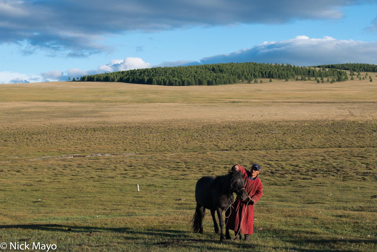 Horse, Khovsgol, Mongolia, photo