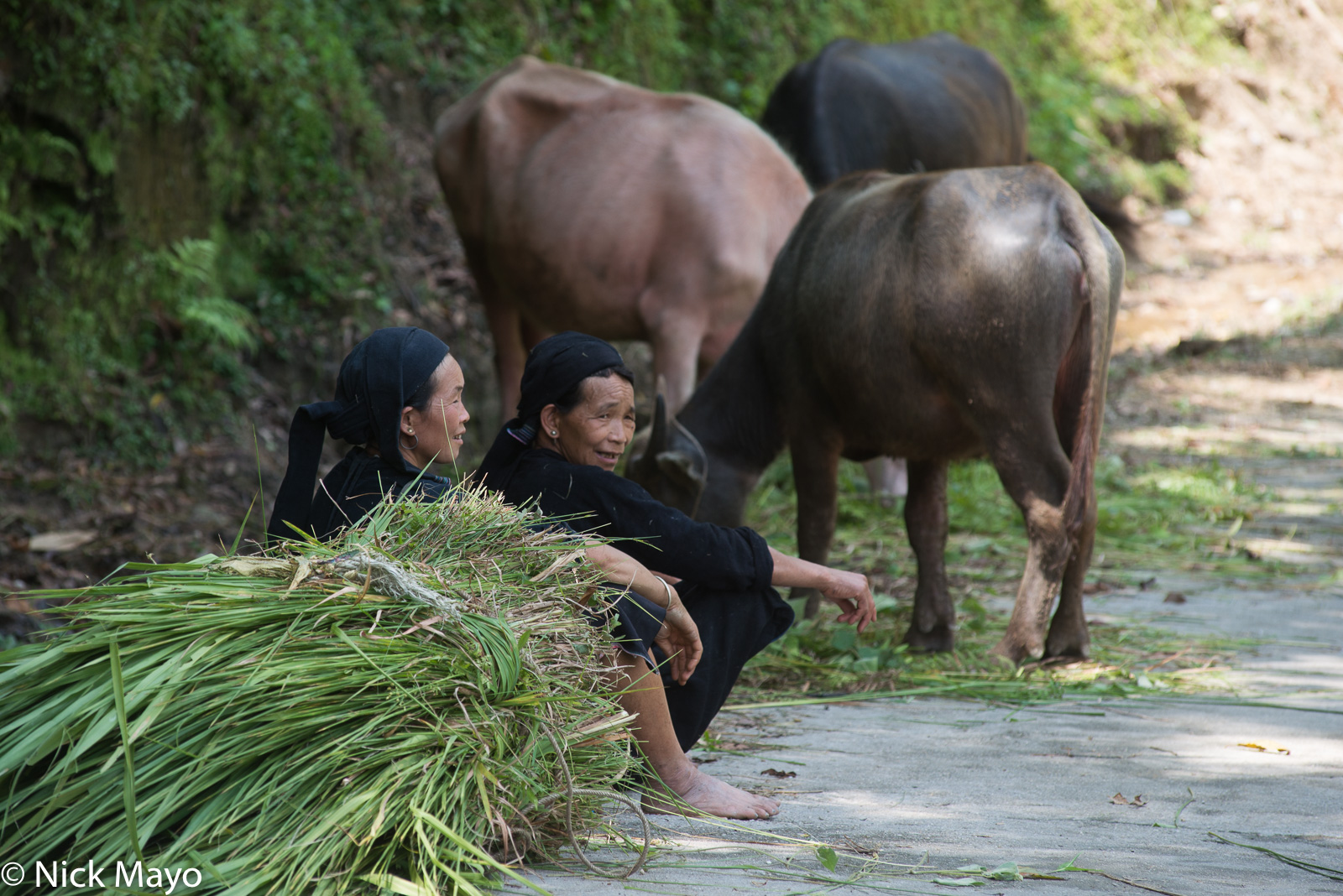 Fodder, Ha Giang, La Chi, Vietnam, Water Buffalo, photo
