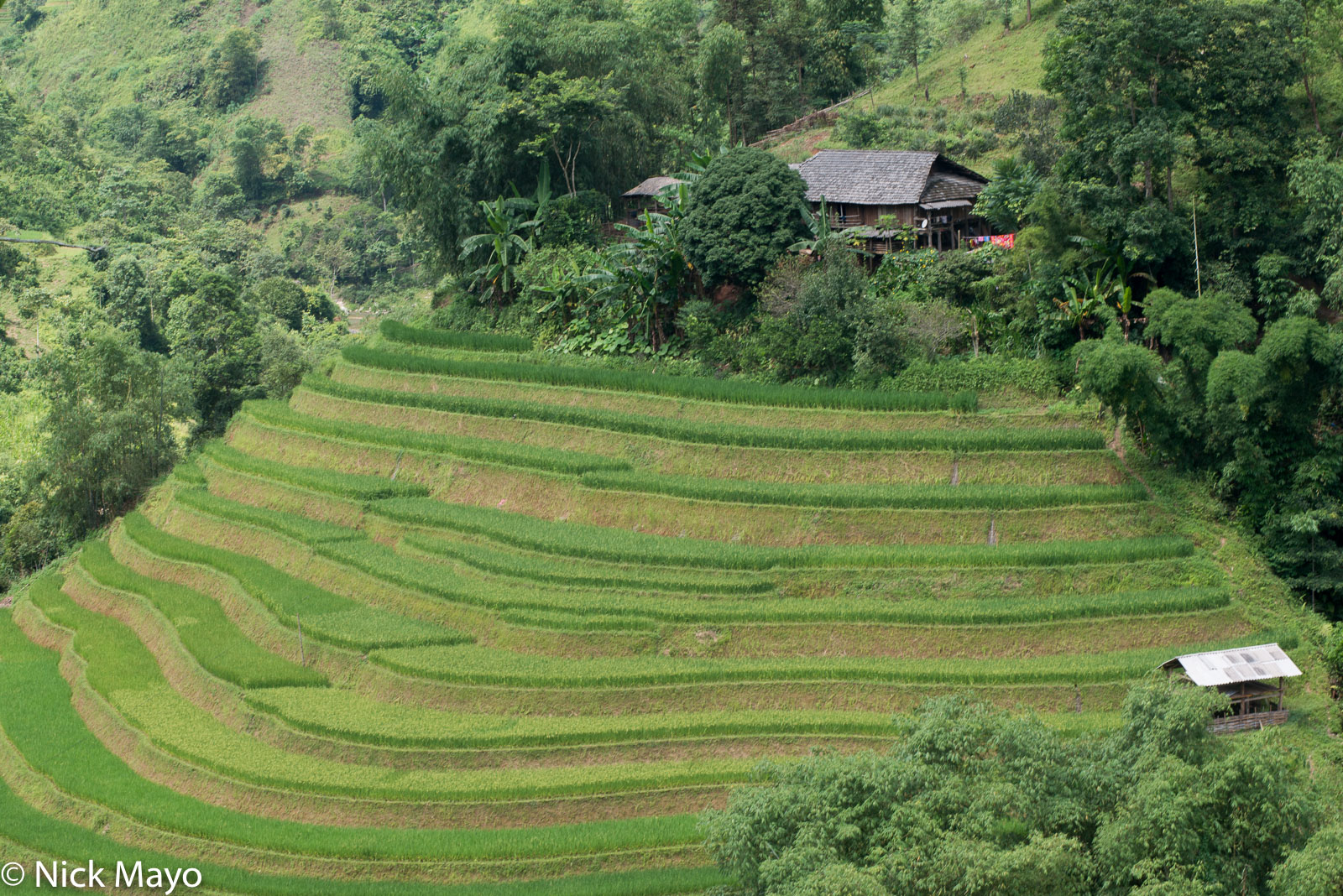 Ha Giang, Paddy, Residence, Vietnam, photo