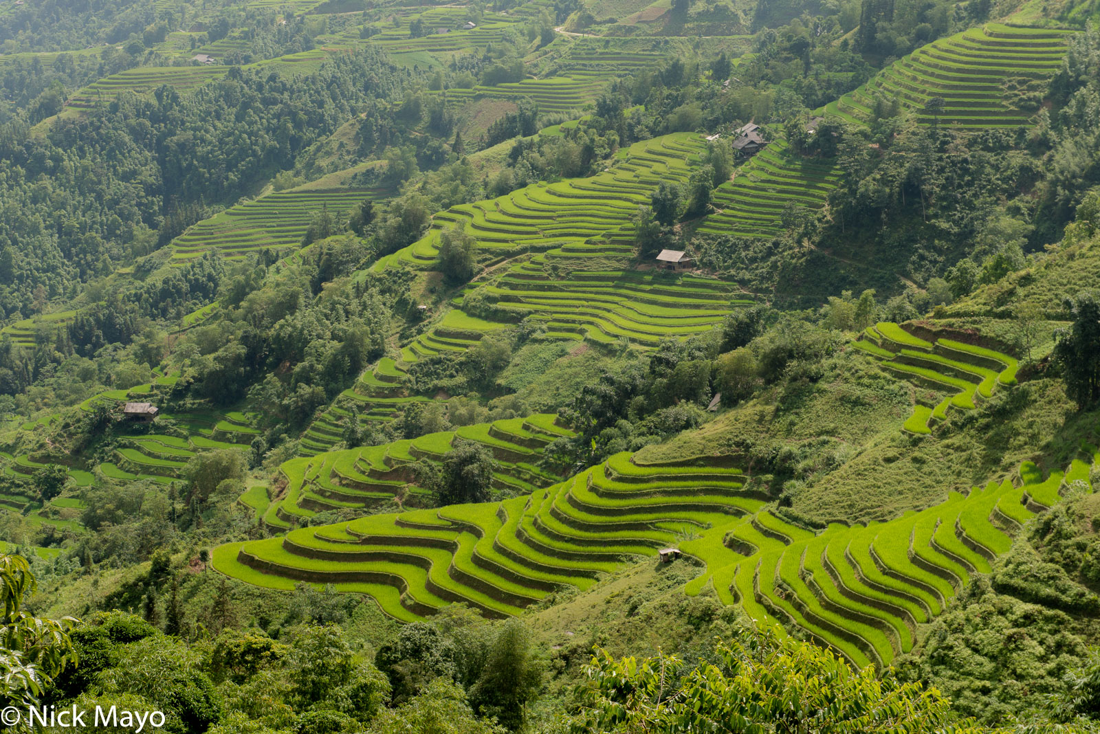 Ha Giang, Paddy, Vietnam, photo