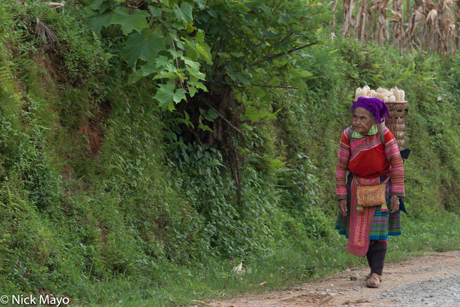 A Hmong woman from Nam Ma carrying harvested corn home in a backstrap basket.