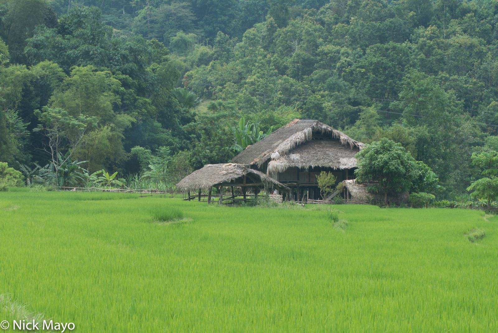 A stilted thatched house standing behind a paddy rice field at Minh Ngoc.