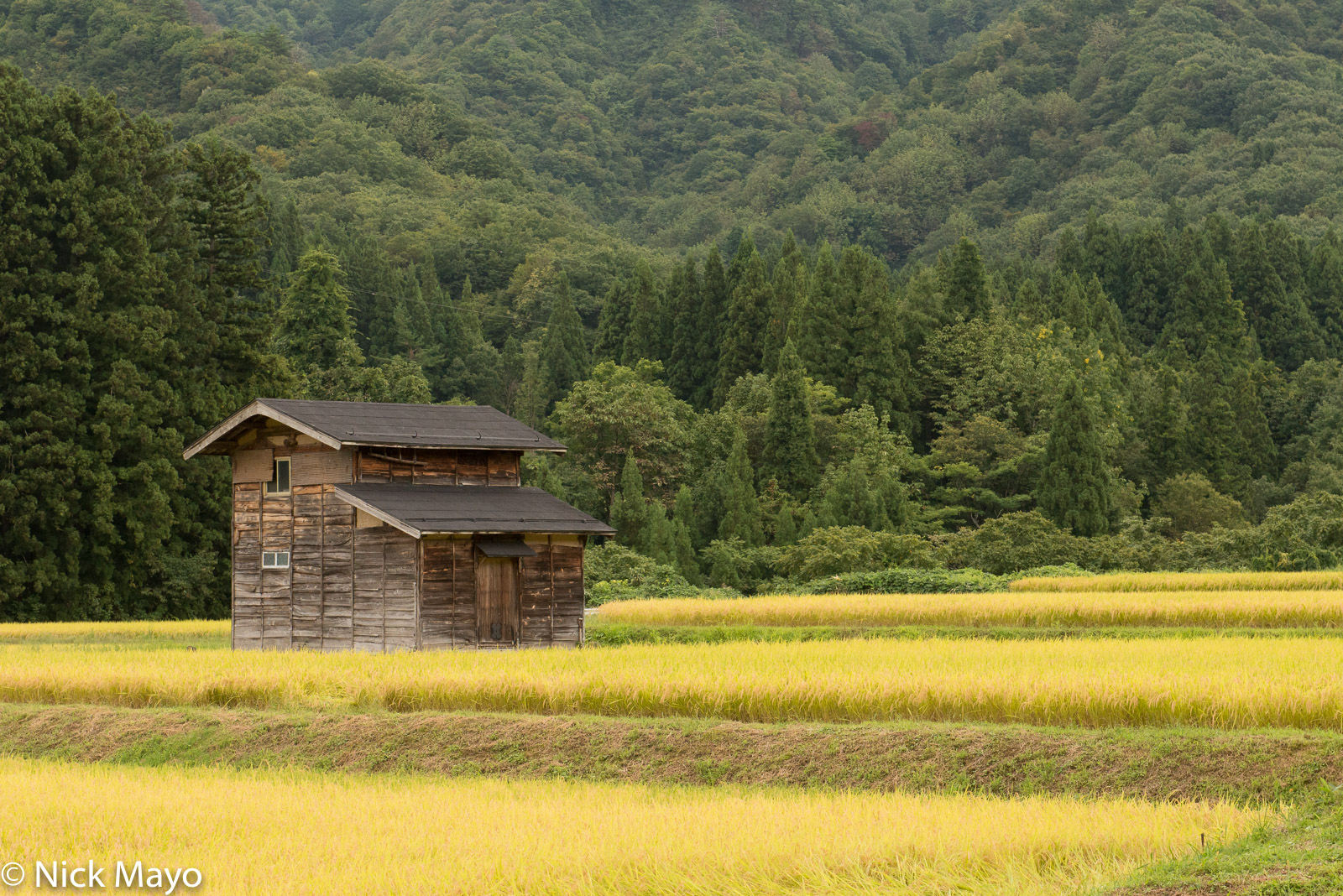 Chubu, Hut, Japan, Paddy, photo