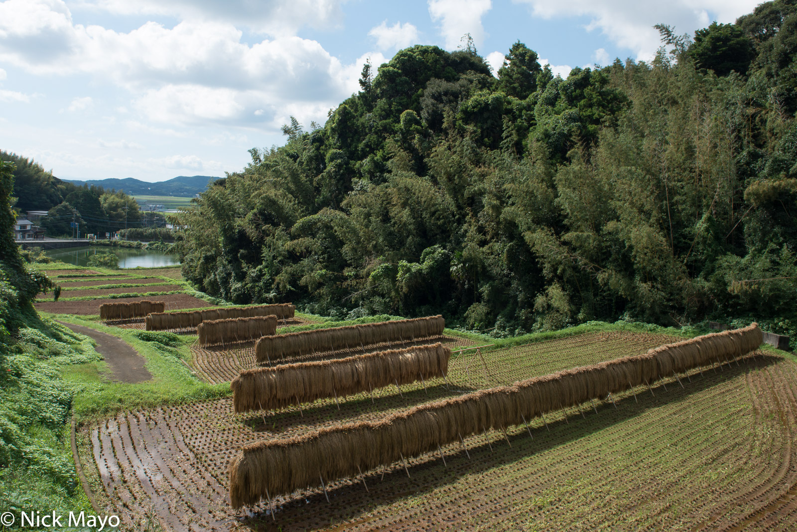 Drying Rack, Japan, Kyushu, Paddy, photo