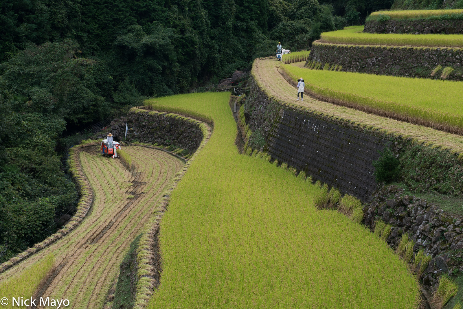 Farmers harvesting paddy rice on the magnificent stone built terraces at Warabino.