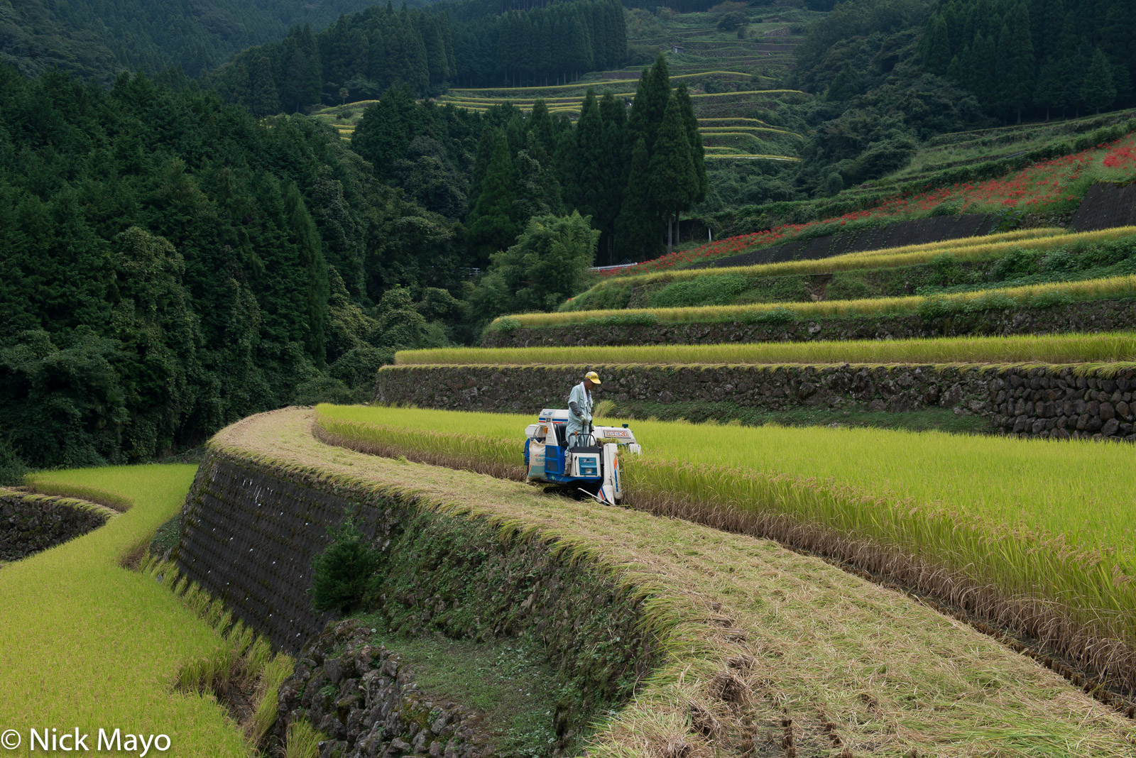 Harvesting, Japan, Kyushu, Paddy, photo