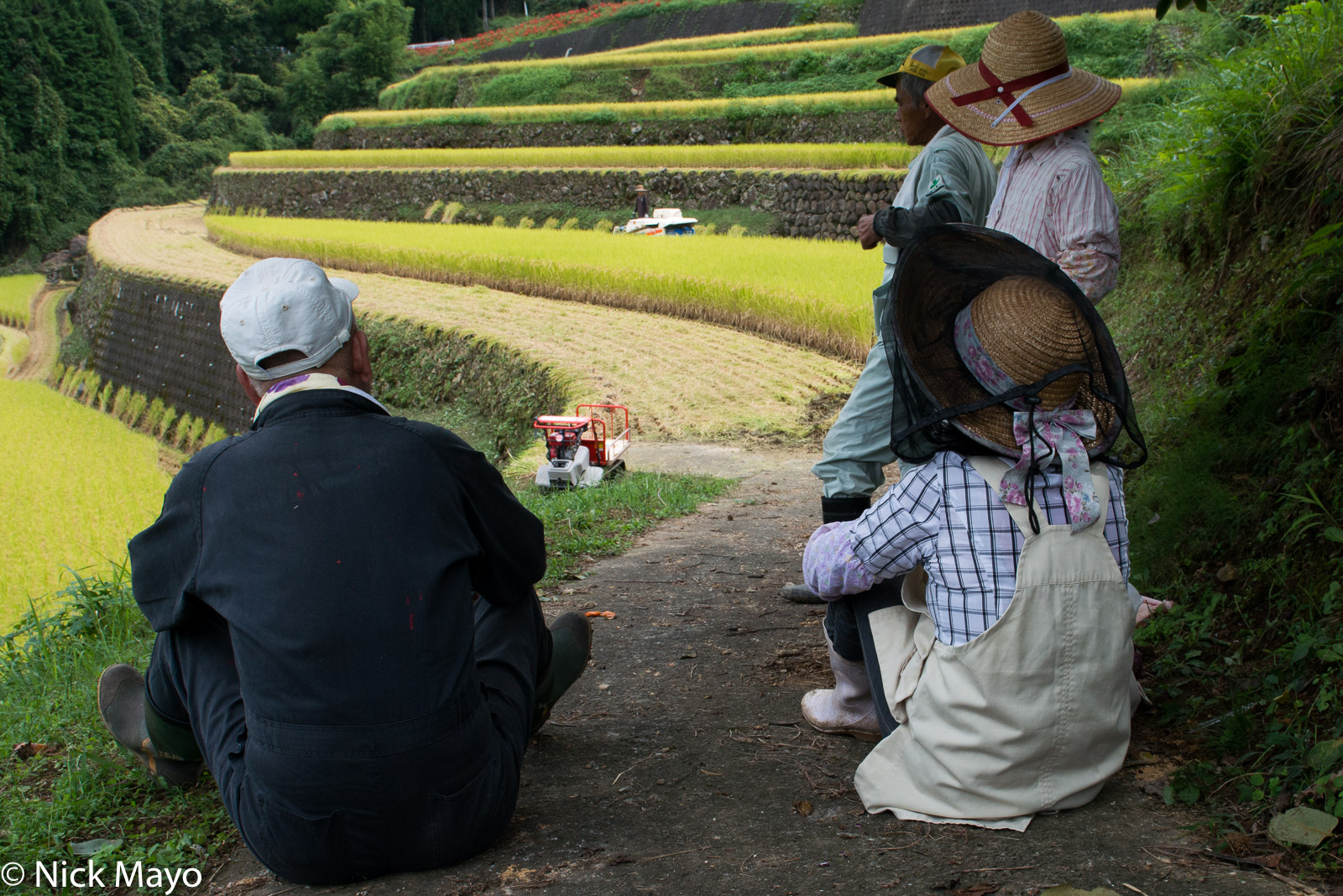 Farmers taking a break from harvesting paddy rice at Warabino.