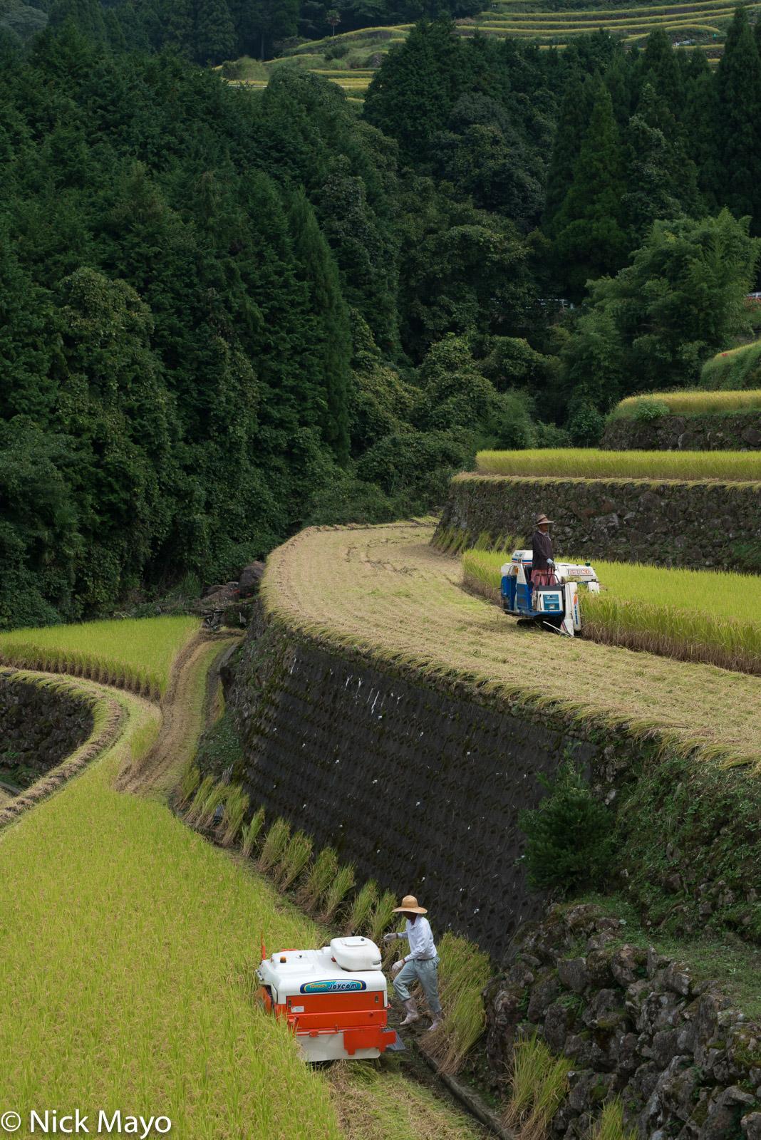 Harvesting, Japan, Kyushu, Paddy, photo
