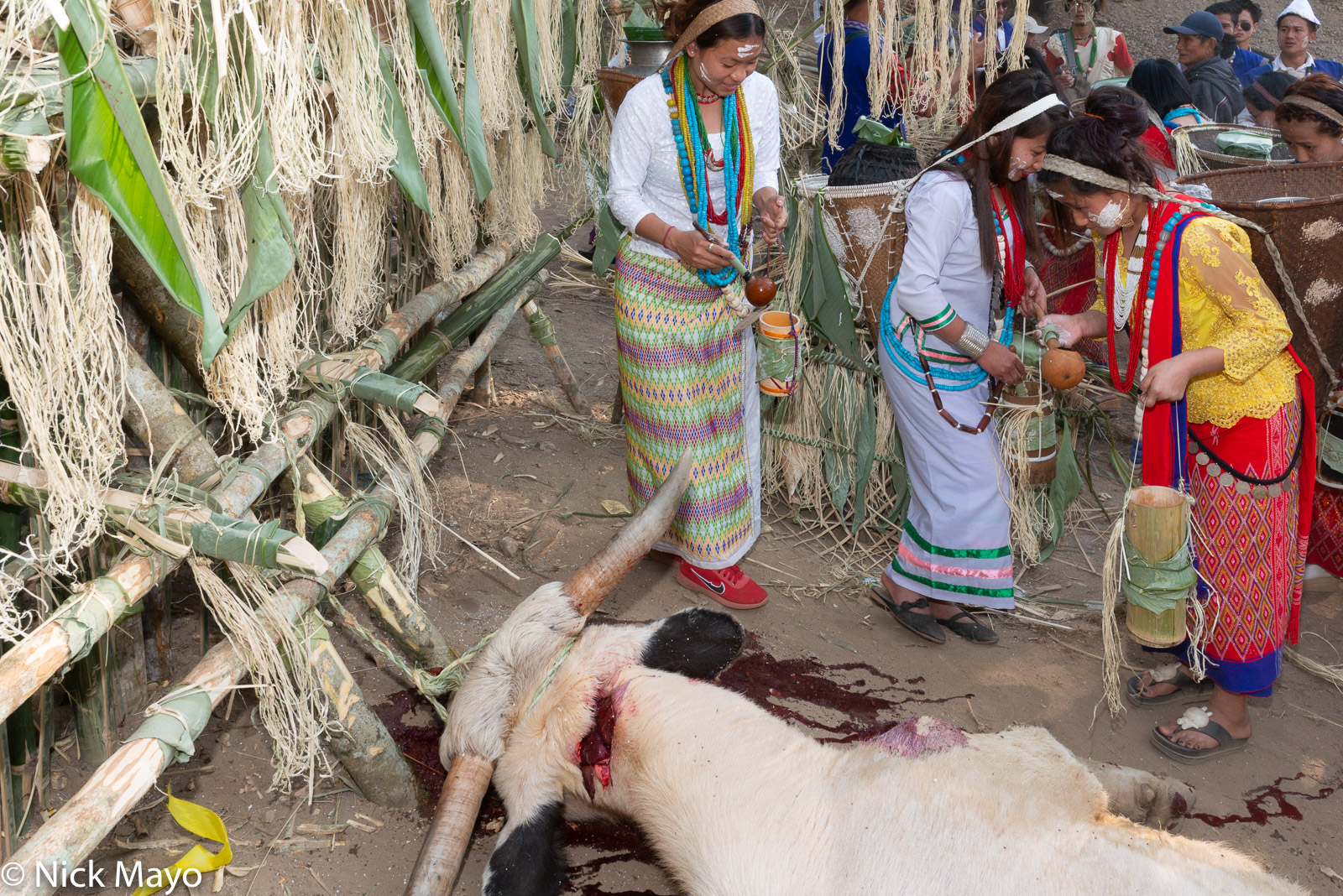 A Nyishi woman at the Tamen Boori Boot festival about to perform a purification ritual for a freshly killed mithun in front of...