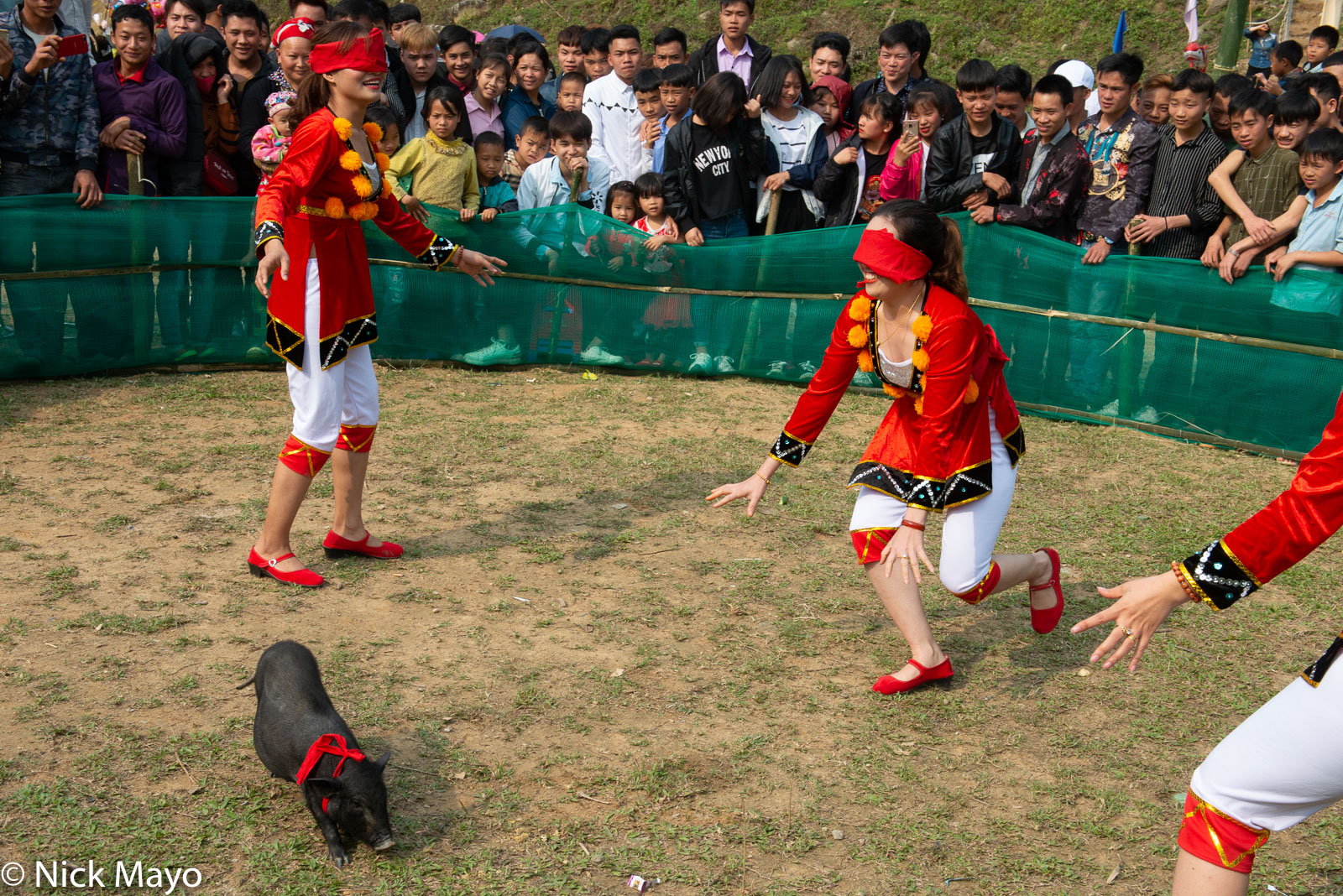 Festival, Game, Lao Cai, Pig, Vietnam, Animals And Birds, Recreation