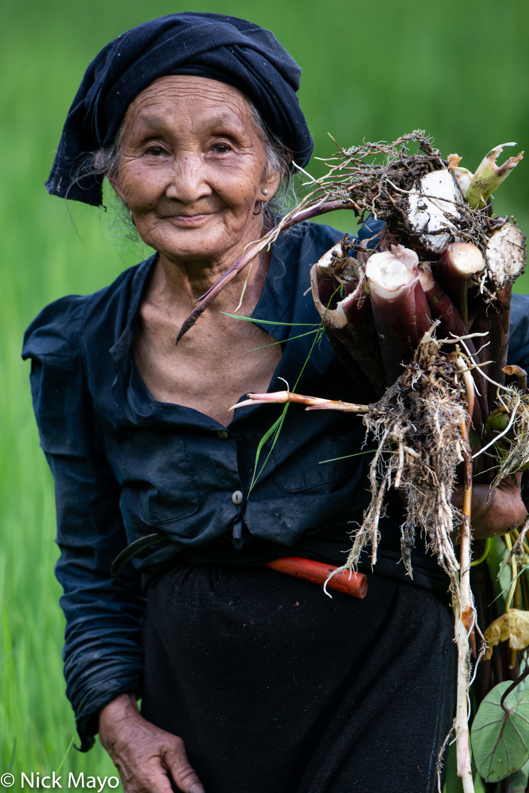 Ha Giang, La Chi, Vegetable, Vietnam, photo