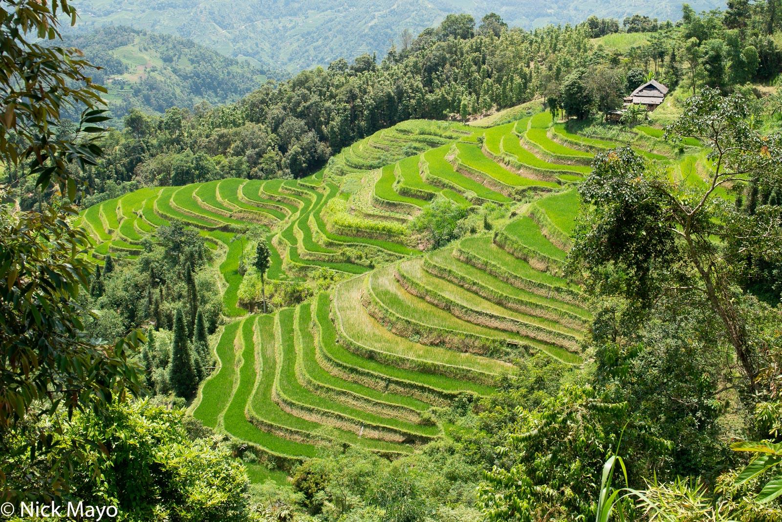 A house atop paddy rice terraces at Ta Su Choong.