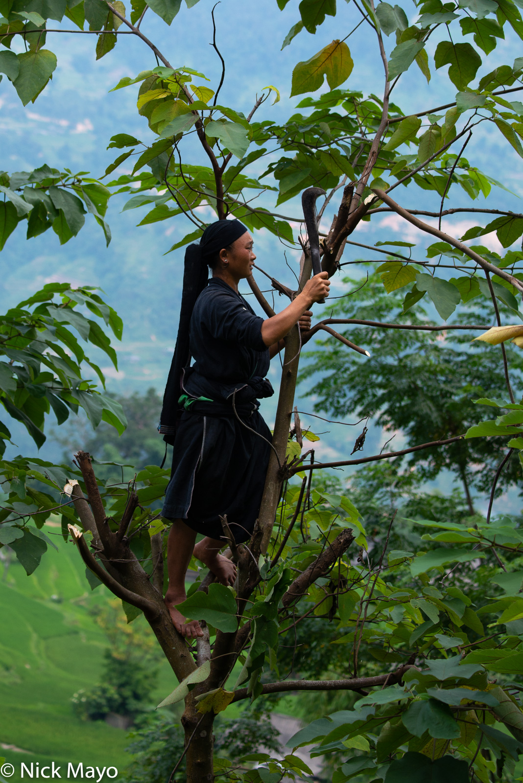 A La Chi girl cutting leaves for fodder with a machete at Ban Phung.