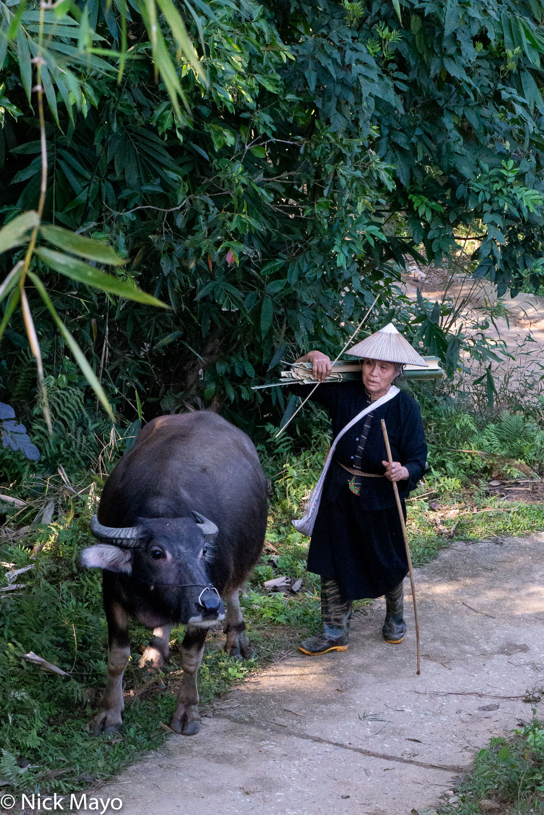 A Tay (Zhuang) woman with her water buffalo at Thon Tha village.