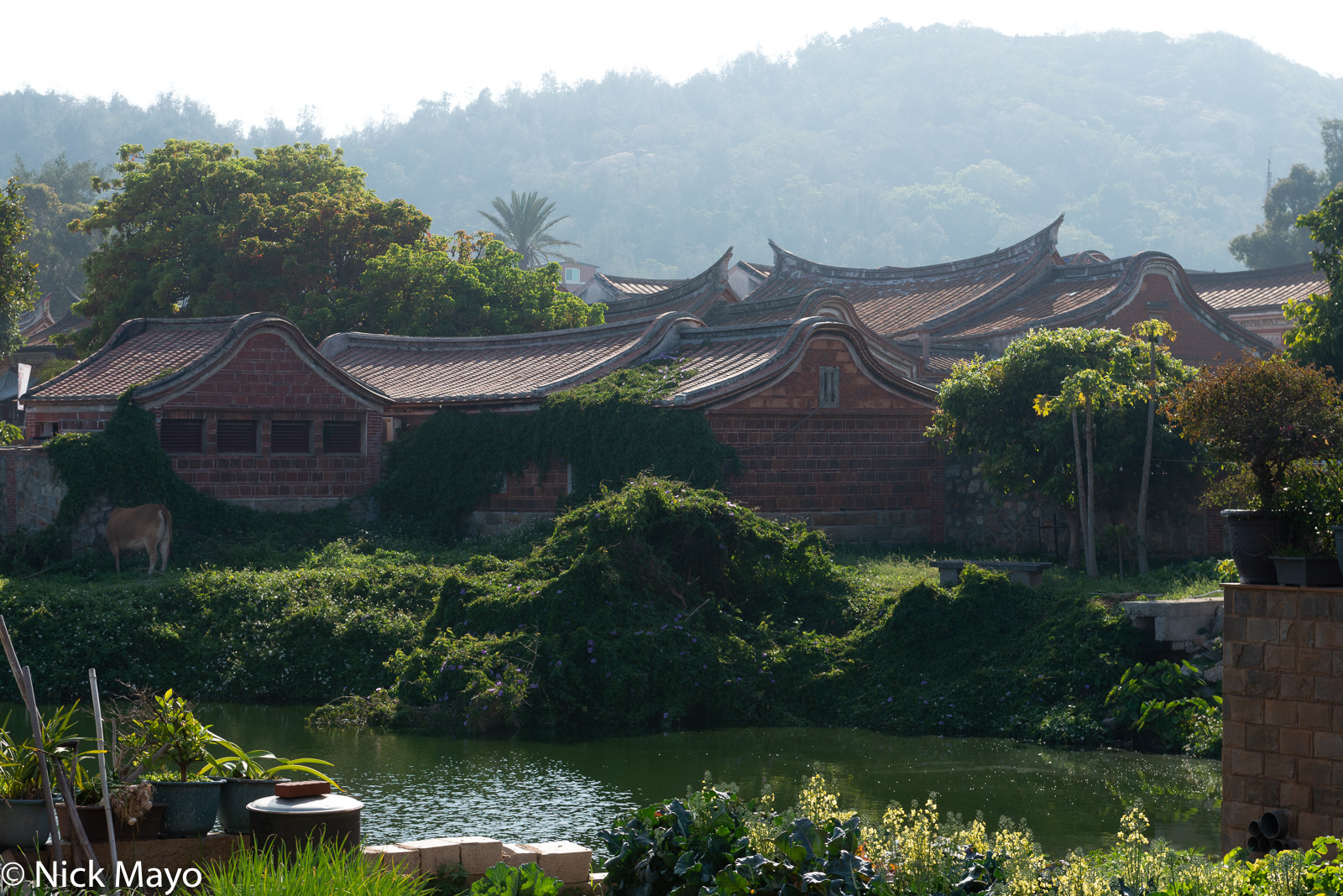 Minnan style architecture with its distinctive roofs at Shanhou village on Kinmen.