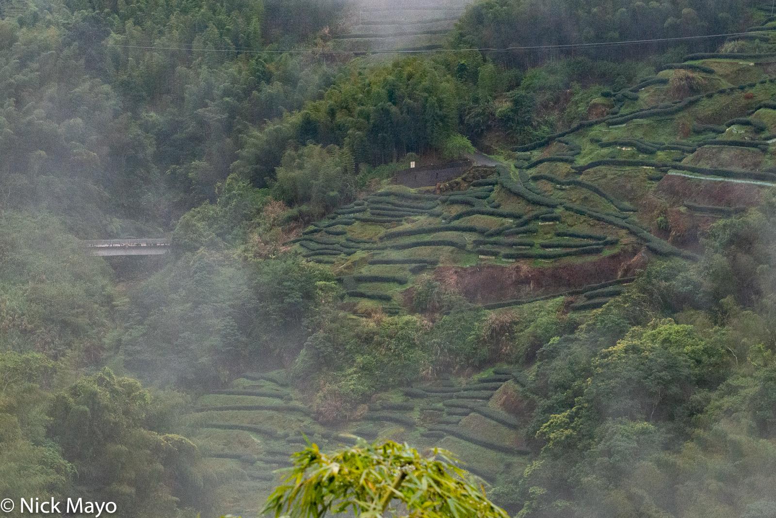 A mountainside tea plantation at Cui Shan Cha Yuan in Nantou County.