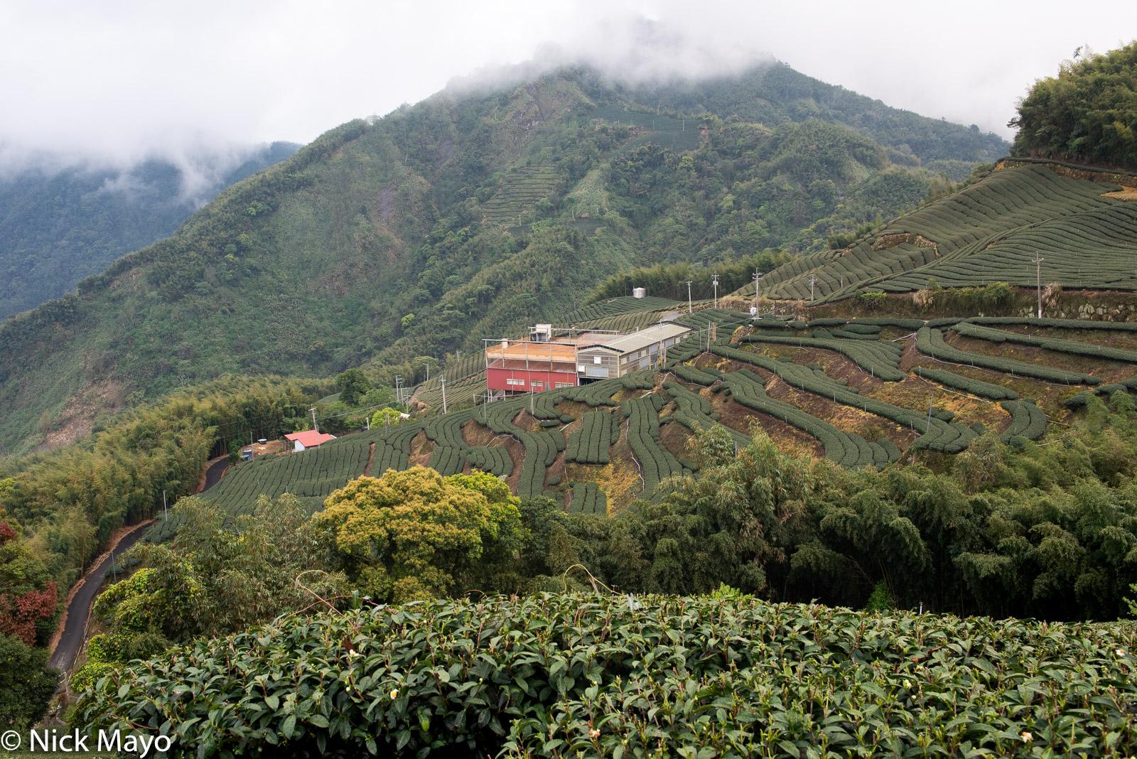 The processing factory amongst the tea fields at Pan Zai Tian in Yunlin County.