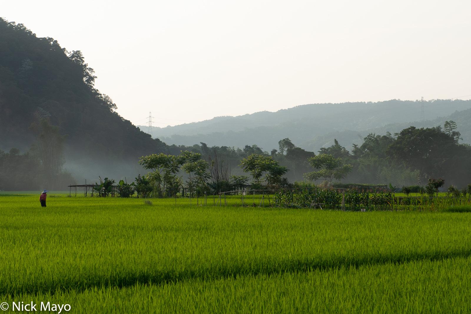A farmer walking through his paddy fields near Guanxi at dusk.