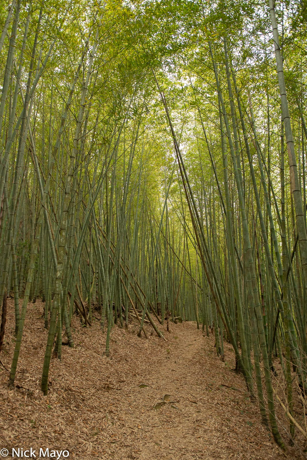 A section through bamboo of the old Ruitai trail near Ruili.