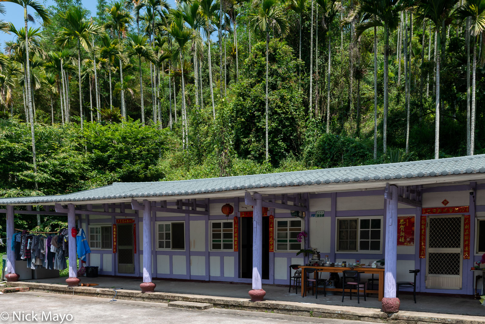 A tea farmer's traditional residence below betel trees at Ruili in Chiayi County.