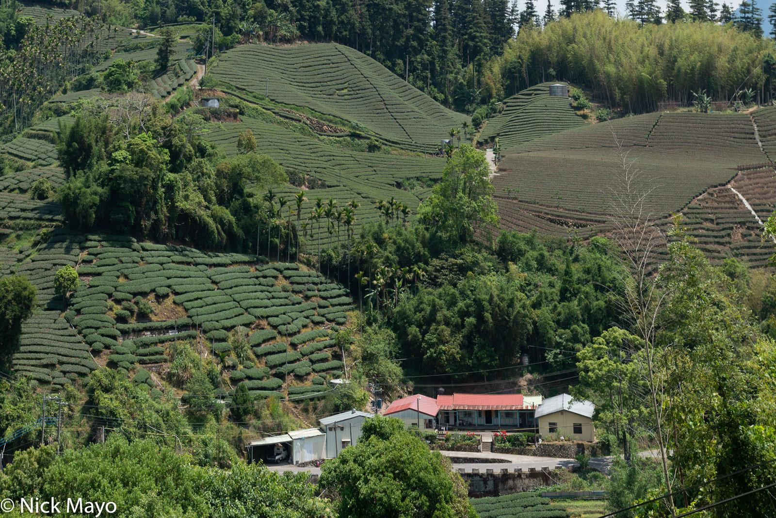 A traditional courtyard farmhouse near Ruili below fields of tea, betel & bamboo.
